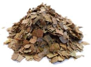 Combretum micranthum leaves